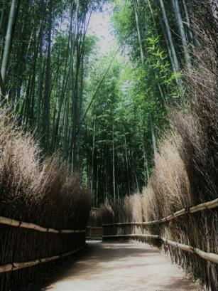 Path through bamboo forest