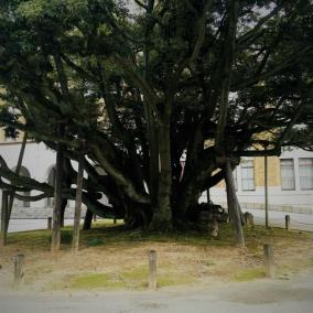 It looks like some trees do need support