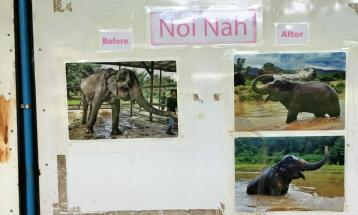 sample of 'before' & 'after' they got rescued