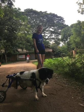walking the disabled dogs ...