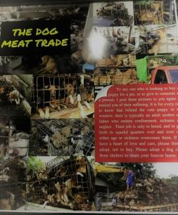 Info about 'The dog meat trade'