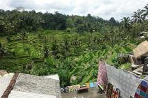 Rice Field close to Ubud
