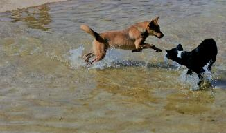 Running in the water ...